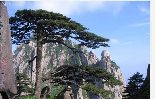 中国——黄山 a.JPG